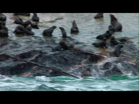 Deadly Waters - South African Sharks