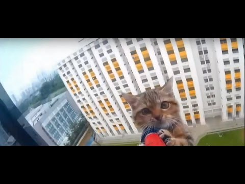 Singapore: amazing video of a kitten rescued from a 12th-floor window ledge