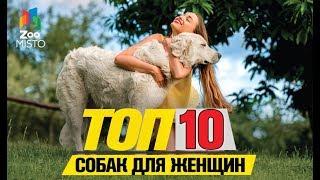Топ 10 пород собак для женщин | Top 10 dog breeds for women