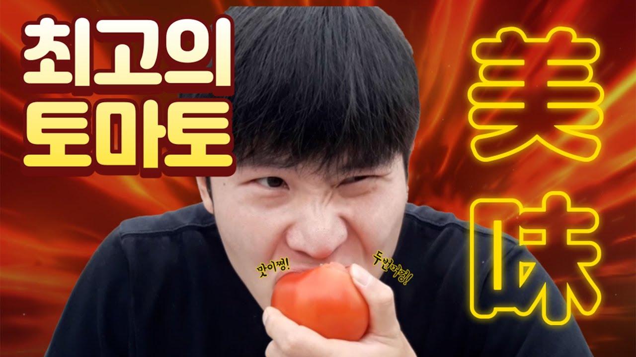ASMR 스트레스해소  [19화 모닝농원  편]  #토마토 #세상행복 맛 #건강 함께해요