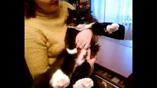 кот Мартин и щекотки