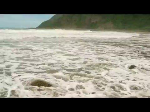 East Coast - South Island - New Zealand