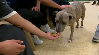 HTownTails: Sonny the rescue dog helps juveniles looking for a second chance