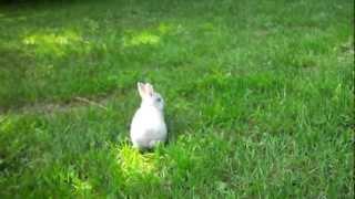 Cute little running bunny! Un lapereau trop charmant !