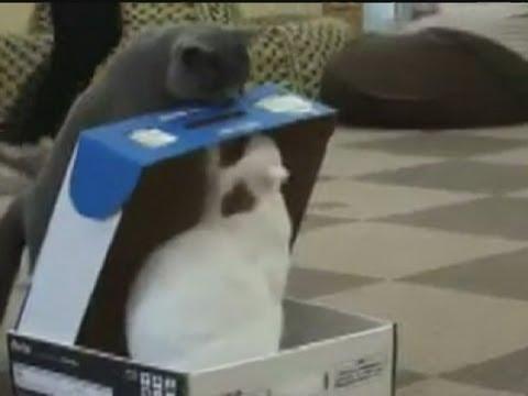 Bully Cat Traps Cat In A Box