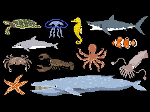 Animals Under The Sea - Book Version - Whale, Lobster, Octopus & More - The Kids' Picture Show