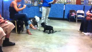 Puppy Training Class At Petsmart Level 1