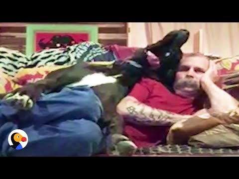 GIANT Great Dane Snuggles With Dad on Tiny Couch | The Dodo