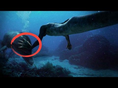 Conoce La Verdadera Historia De Las Sirenas.