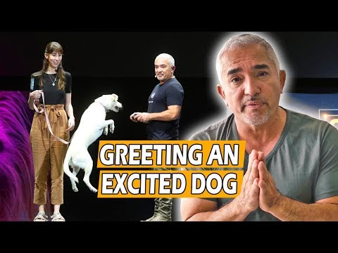 how-to-calm-an-excited-dog-(first-meeting)---live-dog-demo!