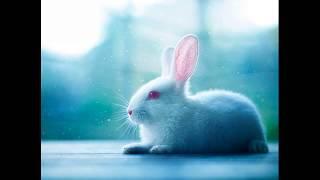 Болезни кроликов и их симптомы. Болеют ли кролики в вольере?