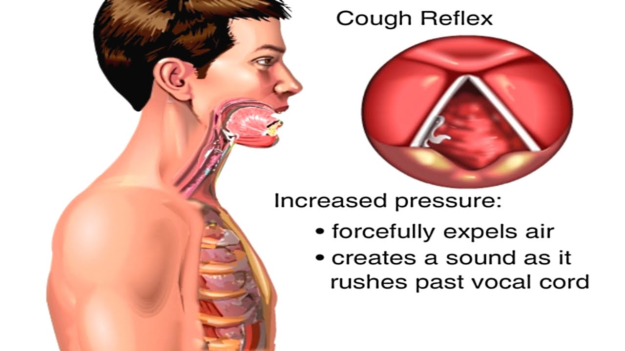 Why cough 7