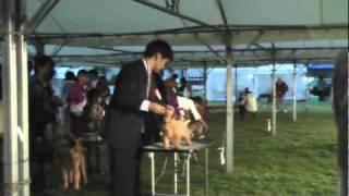 御前崎マリンパークにて10月9日ドッグショーが開催されました。 ノーフ...
