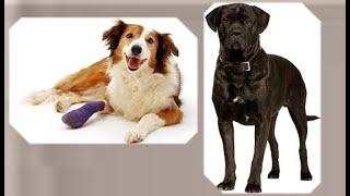 Перелом   кости   у   собаки