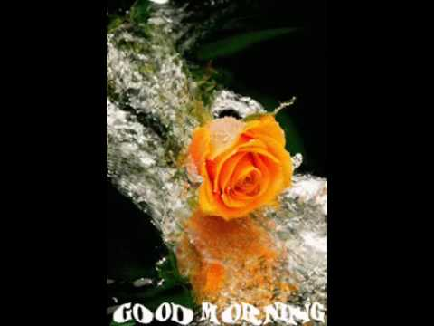 good morning rose flower images free download のyoutube検索結果