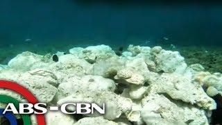 Coral ng Scarborough wasak dahil sa mga barkong may tatak ng T…