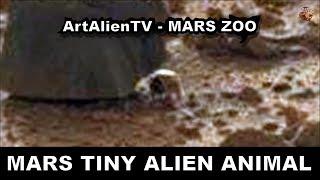 Mars - Tiny Alien Animal Head: Curiosity Anomaly. ArtAlienTV - 1080p
