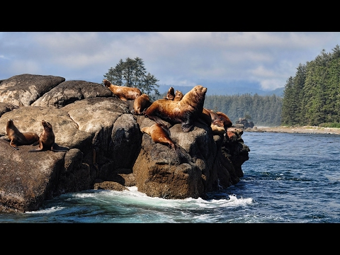 West Coast Trail - The Best Hike in the World - Full Documentary