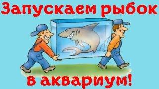Как правильно пересаживать аквариумных рыбок в аквариум после покупки! [#Аквариумные рыбки](Как правильно пересаживать аквариумных рыбок в аквариум после покупки! Дядя Вася: http://www.youtube.com/user/LiveOnCli......, 2016-03-26T09:16:59.000Z)
