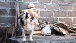 O cachorro que late para o muro!!!!