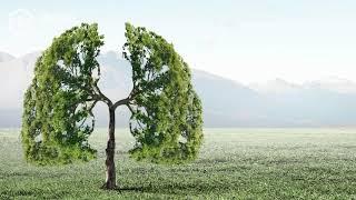 SmartBee Club - Dlaczego bez roślin nie byłoby życia na Ziemi? (Energia słoneczna)