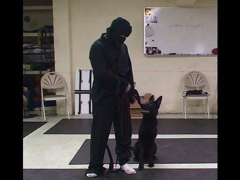 'Leash Ninja' Dog Training Lesson FULL VERSION by www.K9-1.com