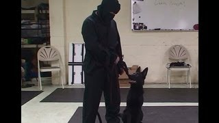 """leash Ninja"" Dog Training Lesson Full Version By Www.k9-1.com"