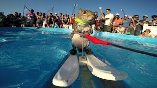 GoPro: Twiggy the Waterskiing Squirrel