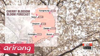 Spring flowers in Korea bloom early