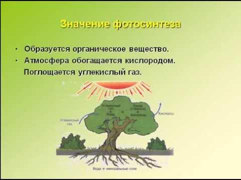 Обложка сонин биология 8 класс