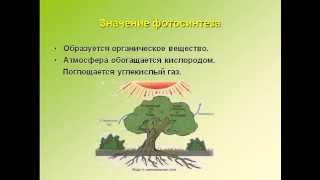 Фотосинтез урок биологии в 6 классе