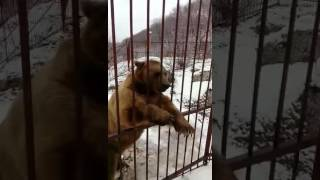 Человек разговаривает с медведем