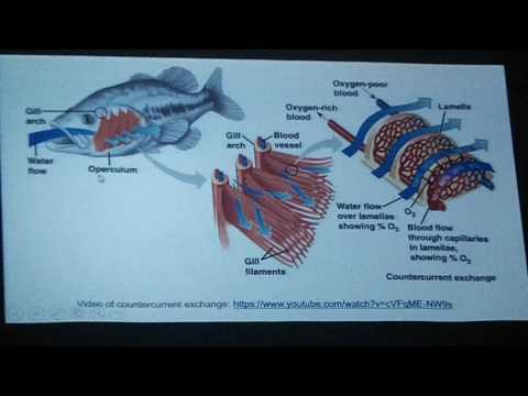 Mr  Willis' Awesome Marine Biology Book   Chapter 26   Biology of Fishes