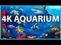 Capture de la vidéo The Best 4K Aquarium For Relaxation 🐠 Sleep Relax Meditation Music - 2 Hours - 4K Uhd Screensaver