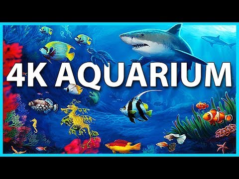 The Best 4K Aquarium for Relaxation 🐠 Sleep Relax Meditation Music - 2 hours - 4K UHD Screensaver - Ржачные видео приколы
