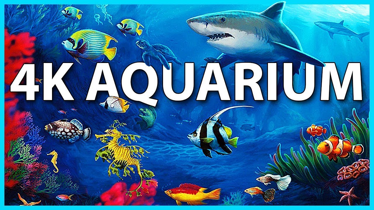 The best 4k aquarium for relaxation sleep relax for Do fish make noise
