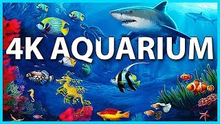 The Best 4K Aquarium for Relaxation 🐠 Sleep Relax Meditation Music - 2 hours - 4K UHD Screensaver thumbnail