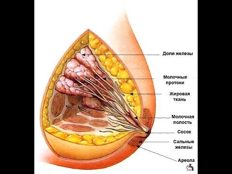 как востоновить форму груди после кормления