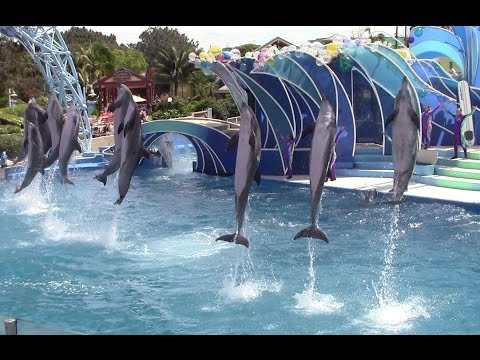 Dolphin Days at SeaWorld San Diego 4-7-15