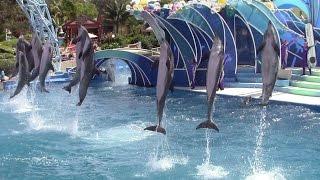 Dolphin Days at SeaWorld San Diego 4-7-15