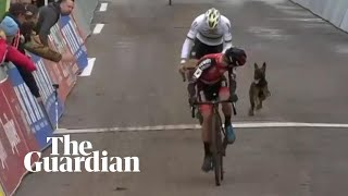 'In third place, somebody's dog': canine disrupts cycling event in Belgium