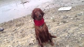 ワイルドだろ~ってヴィッツは自慢げに川遊びだぜ!