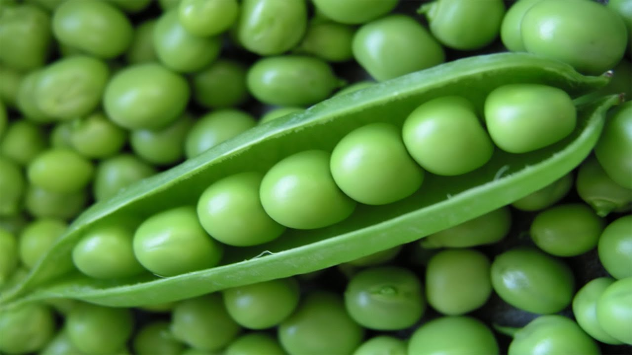 The pea is most commonly the small spherical seed or the seed-pod of the pod fruit Pisum sativum. Each pod contains several peas, which can be green or yellow.