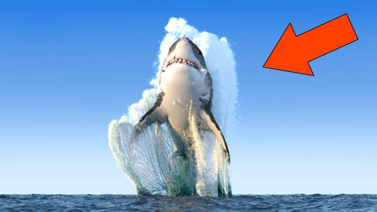 Мегалодон. Вся Правда о самой большой акуле в истории