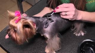 Все О Домашних Животных: Тюнингуем Собак, Тонкости  И Советы