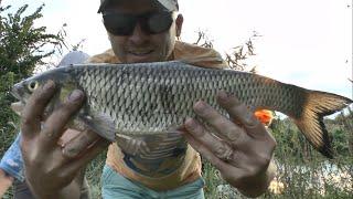 Секретная наживка на голавля Рыбалка на реке Северский Донец Сом на фидер