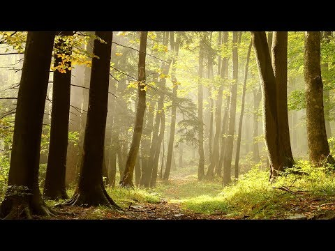 Healing Music, Meditation Music Relax Mind Body, Relaxing Music, Slow Music, ☯3276