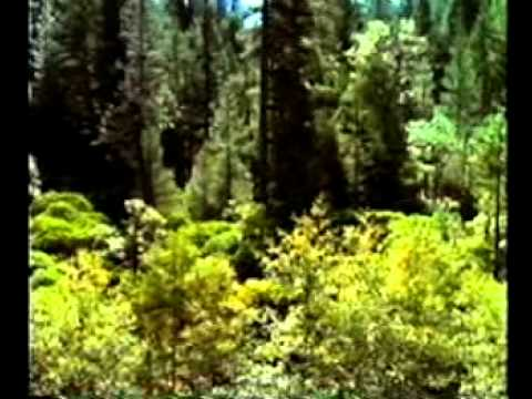 Do Trees Think?