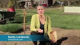 How to Grow Onions - Homeclick Garden Tip #9