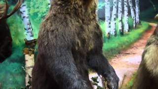 видео Музей леса им. А. Р. Варгаса де Бедемара